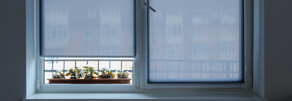 Sheer roller blind rolled up to reveal potted succulents
