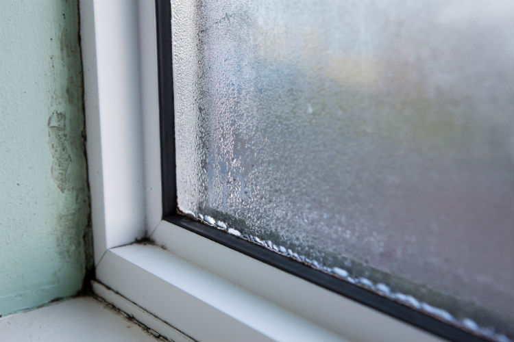 mould and condensation on window